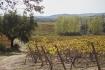 monte ravasqueira vinha