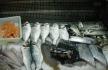 3 geração peixe.jpg