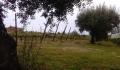 Vinha e oliveiras