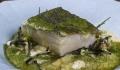 site Salpoente bacalhau