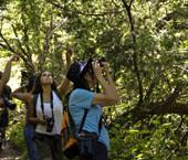 Birdwatching do Carvalhal