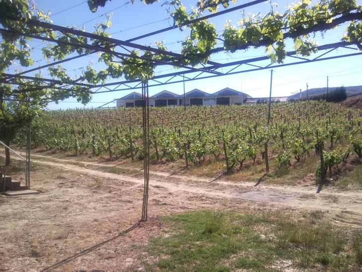 quinta da sequeira vinhas 730