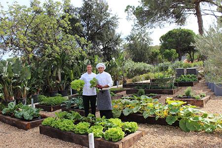 Kitchen Garden 450