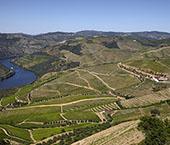 Vinho é Prémio Nacional de Agricultura