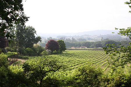 vinha de vinho verde 450