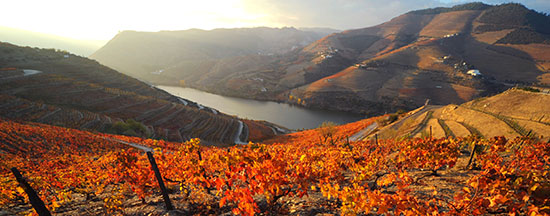 Quinta_do_Seixo_Douro 550