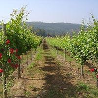 Japoneses na região dos Vinhos Verdes
