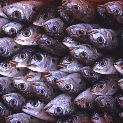 peixe Acores S Miguel