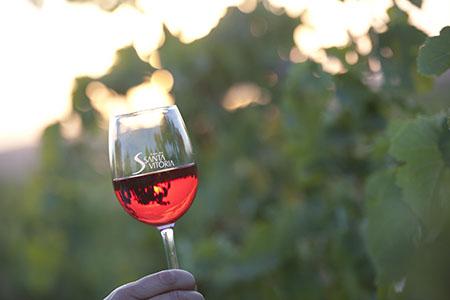 Foto Vinho santa vitoria 450