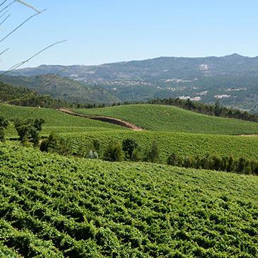 Visitas internacionais à região dos Vinhos Verdes