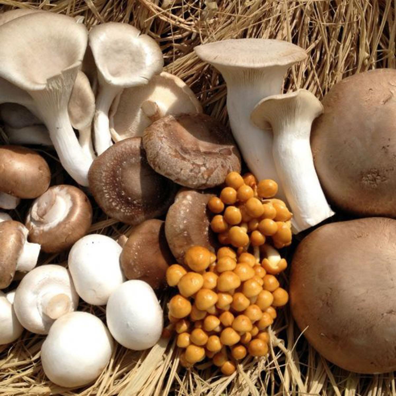 Chapitô organiza 1º Festival dos Cogumelos em Lisboa