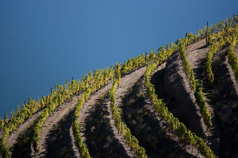 Real Companhia Velha eleita a melhor na 'Viticultura'