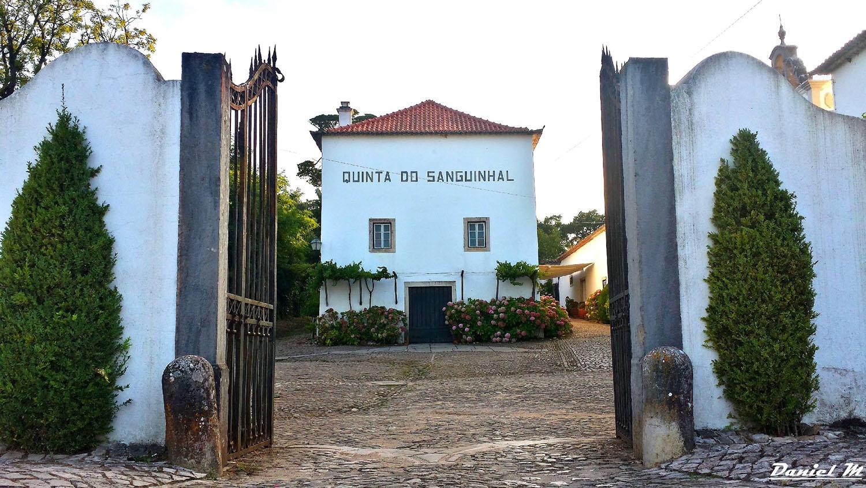 Vinhos da Companhia Agrícola do Sanguinhal no Peixe em Lisboa