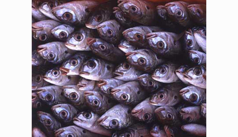 Aptece lança campanha de promoção do peixe português