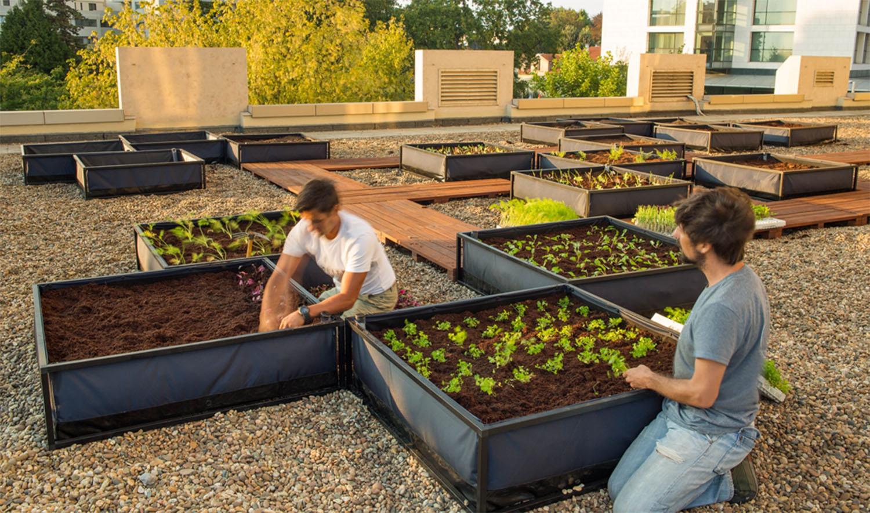Crowne Plaza Porto cultiva horta urbana no coração da Invicta