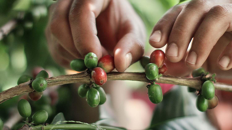Novos aromas raros com novas indescritíveis da Nespresso