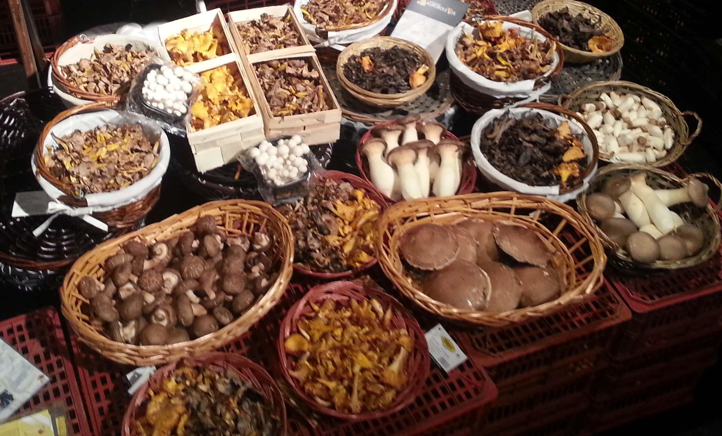 2ª Edição Festa dos Cogumelos no Chapitô