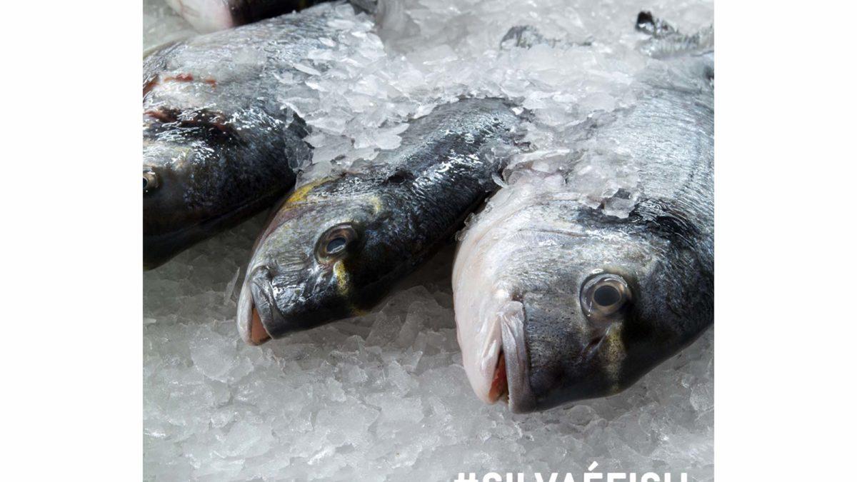 Entrega de peixe em casa para Lisboa e Alentejo