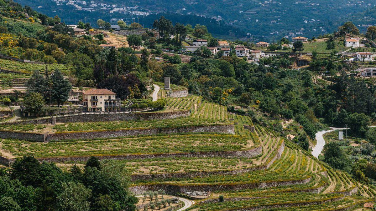 40 hectares de vinha com certificação biológica